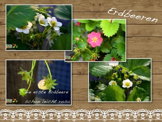 wpid-erdbeere5-2012-05-29-17-00.jpg