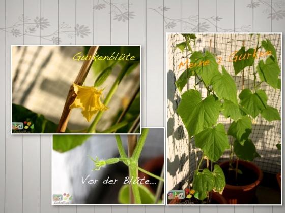 wpid-gurke4-2012-05-28-20-21.jpg