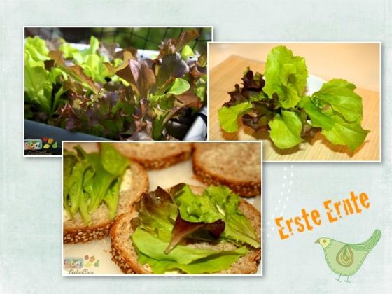wpid-sandwich-bunt2-2012-05-21-20-35.jpg