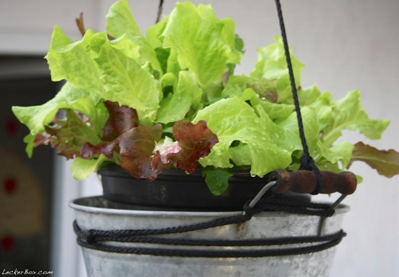wpid-salat-2012-07-22-21-301.jpg